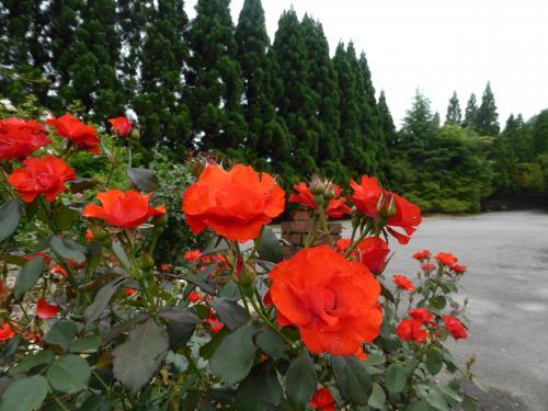 花と滝 4
