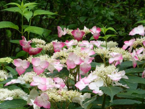花と滝 3