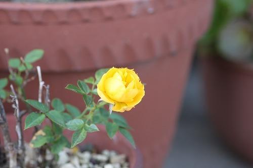 Canon EOS Kiss X320161104_001