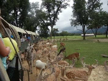 safari tour 1