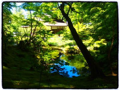 南禅院にて。陽が高いのに蓮も咲いてなかなか趣きのある池。