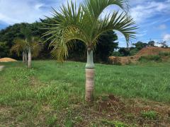おじちゃんの家付近の珍しい植物