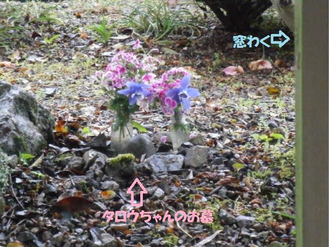 タロウのお墓