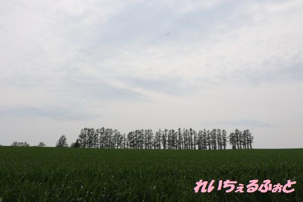 DPP_10804.jpg