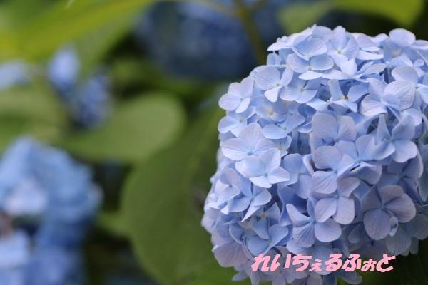 DPP_10959.jpg