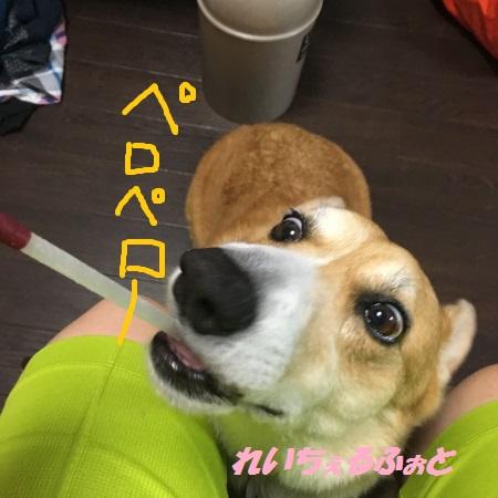 DPP_11203.jpg
