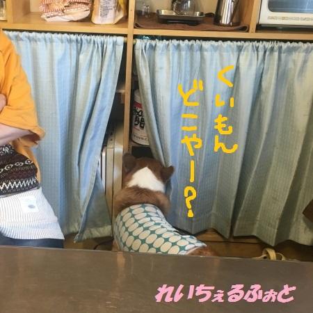 DPP_11278.jpg