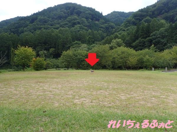 DPP_11461.jpg