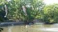 碑文谷公園1