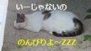 2竹富島ボード横でお昼寝ニャン