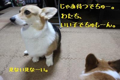11IMG_0293.jpg