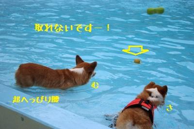 11IMG_1364.jpg