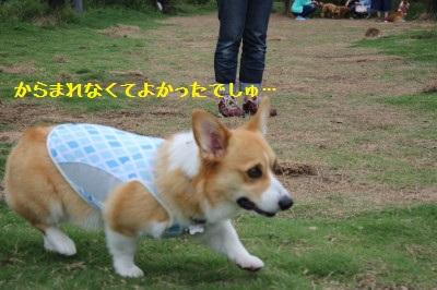 11IMG_9949.jpg