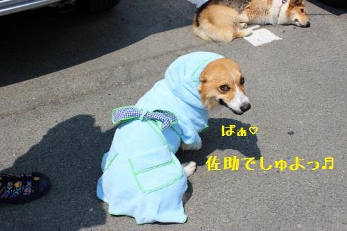 13IMG_0488.jpg