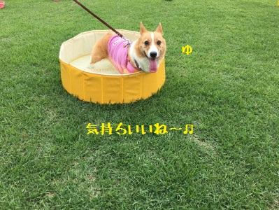 14_1468473521701.jpg