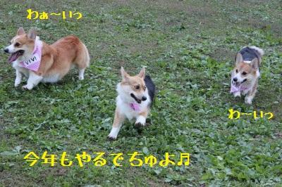 1IMG_2771.jpg