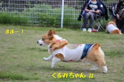 くるみちゃん走る