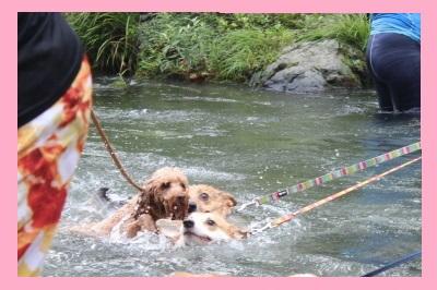9_1昨年の川遊び