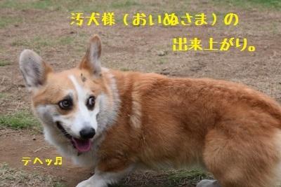 18汚犬様