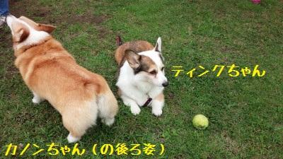 2DSC_0042.jpg