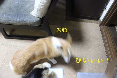 3IMG_0276.jpg