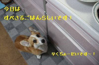 3IMG_0507.jpg