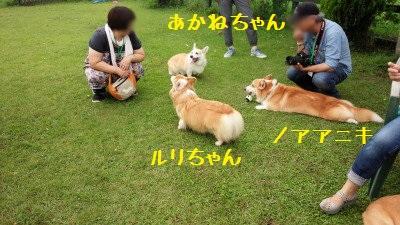 4DSC_0045.jpg
