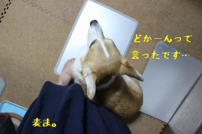 4IMG_0278.jpg