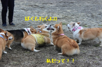 4IMG_0423.jpg