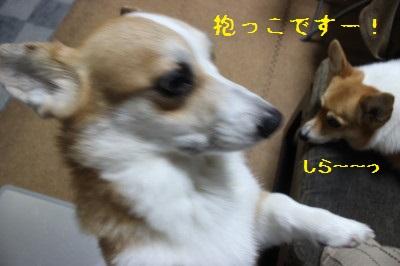 5IMG_0283.jpg