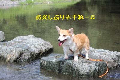6IMG_0929.jpg