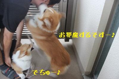 6IMG_9296.jpg