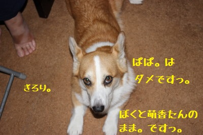 8IMG_0519.jpg