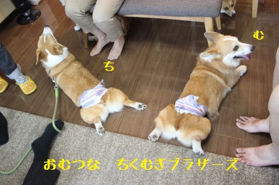 9IMG_9316.jpg
