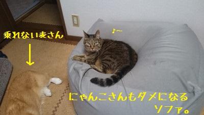 DSC_0145.jpg