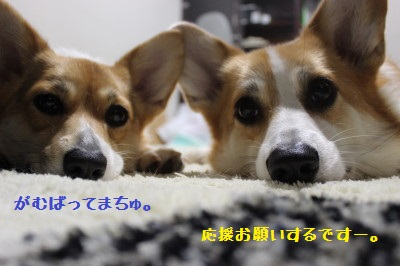 IMG_3637.jpg