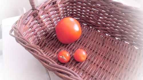 tomato160413-1