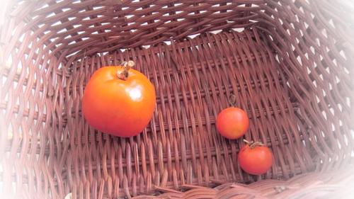 tomato160413-2