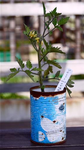 tomato160531-1