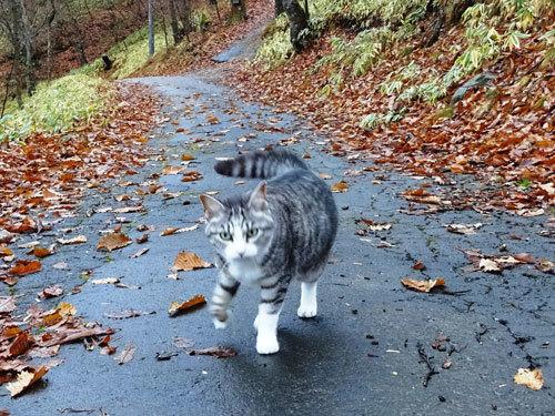 雨でぬれてるもん5