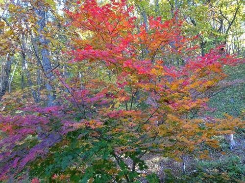 紅葉の季節1