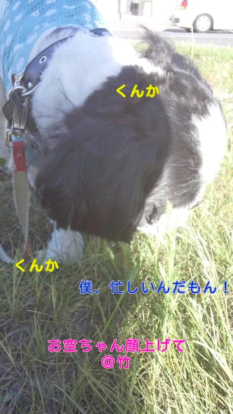 moblog_00f7da1b.jpg