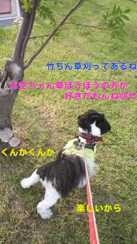 moblog_3832b803.jpg