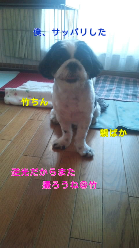 moblog_8024adf1.jpg