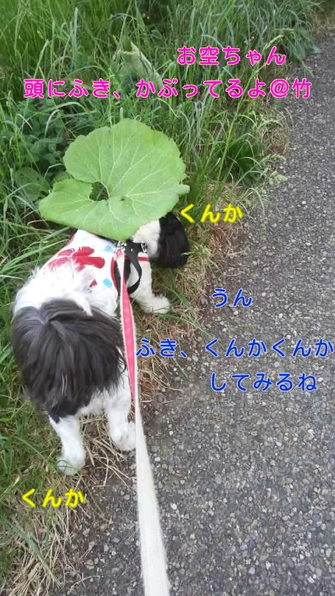 moblog_87b7be44.jpg