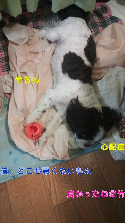moblog_8c897fe4.jpg