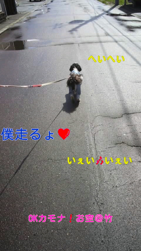 moblog_a4b1737b.jpg