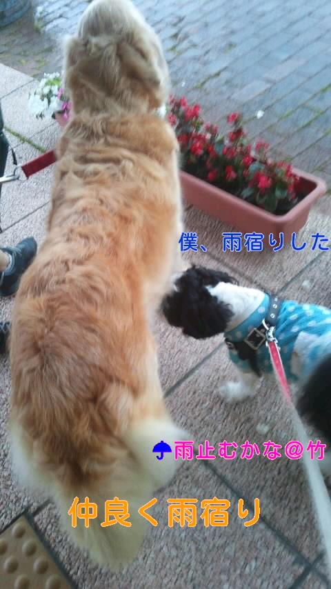 moblog_a925e62f.jpg
