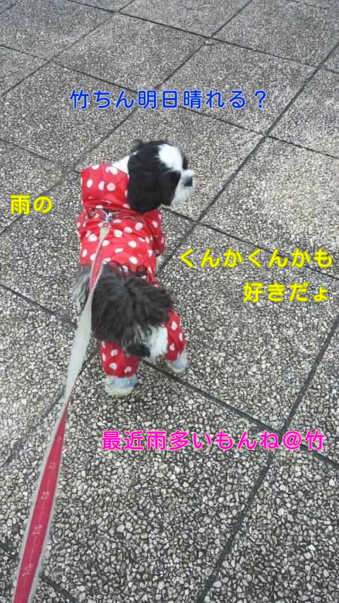 moblog_ac866ab9.jpg