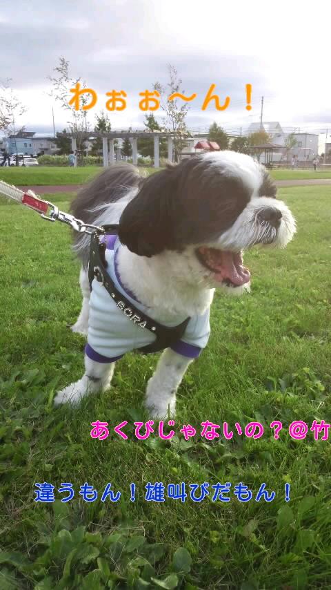 moblog_b7397ed6.jpg